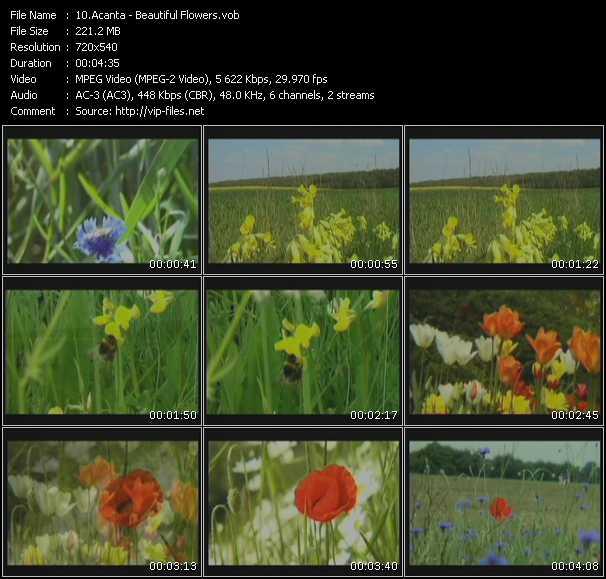 Acanta - Beautiful Flowers